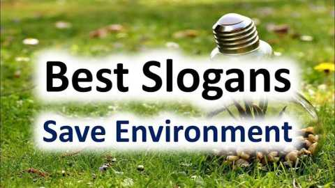 Best Slogans On Environment These Three Way To Protect Our